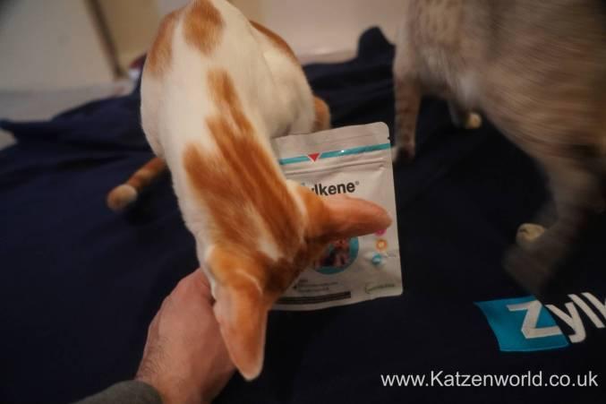 Katzenworld Zylkene0003