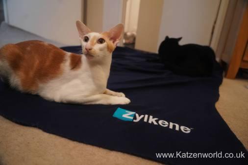 Katzenworld Zylkene0013