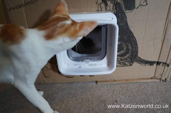 Katzenworld SureFlap0012