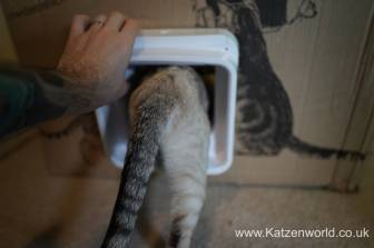 Katzenworld SureFlap0030