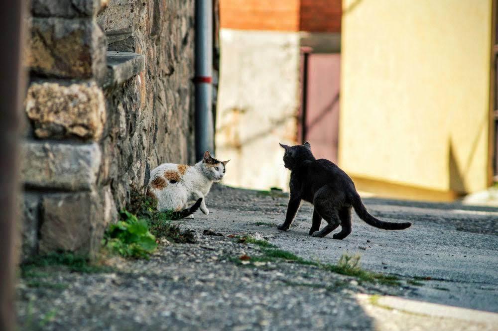 feral-cats-adorable-danger-2