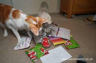 Katzenworld Christmas Stories0002