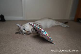 Katzenworld Christmas Stories0010