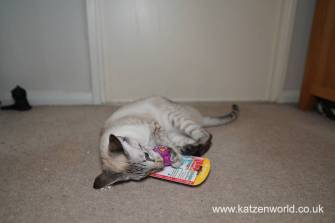 Katzenworld Christmas Stories0018
