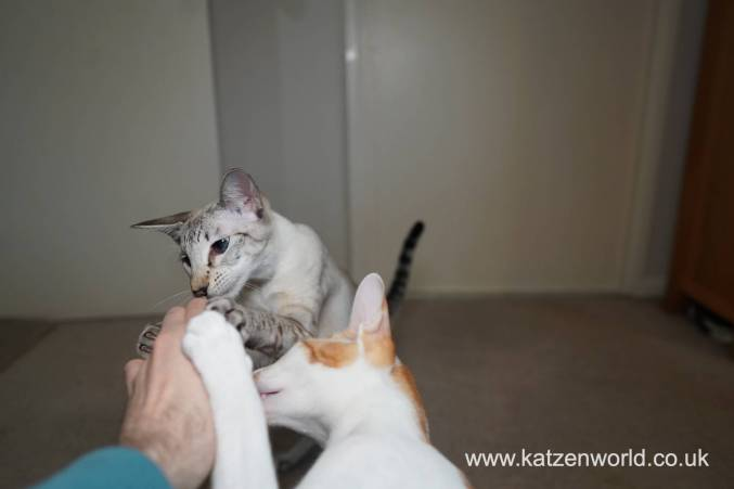 Katzenworld Christmas Stories0039