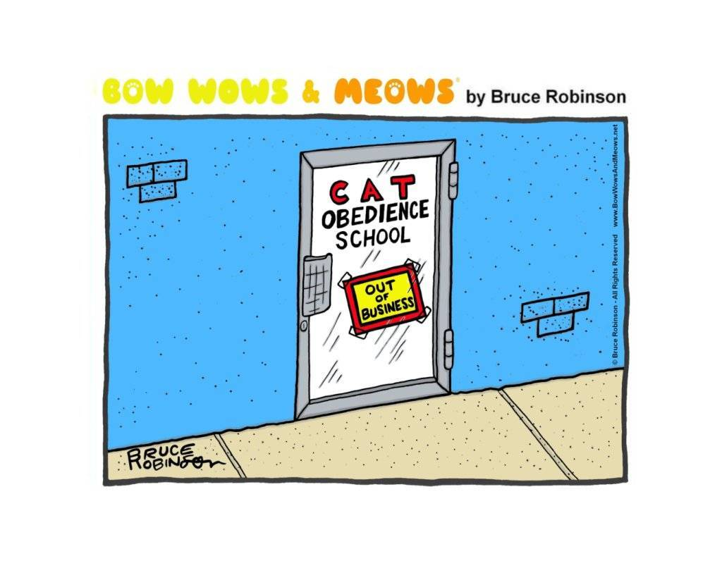 Bow Wows & Meows by Bruce Robinson: Cat Obedience? No chance!