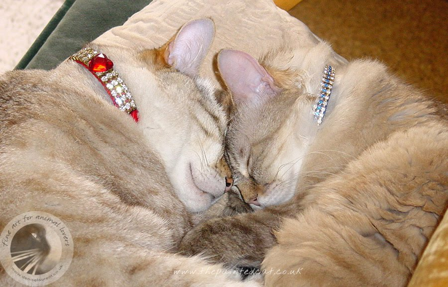 cassie and ming - peacefully sleeping