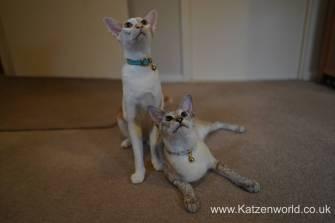 Katzenworld 0014