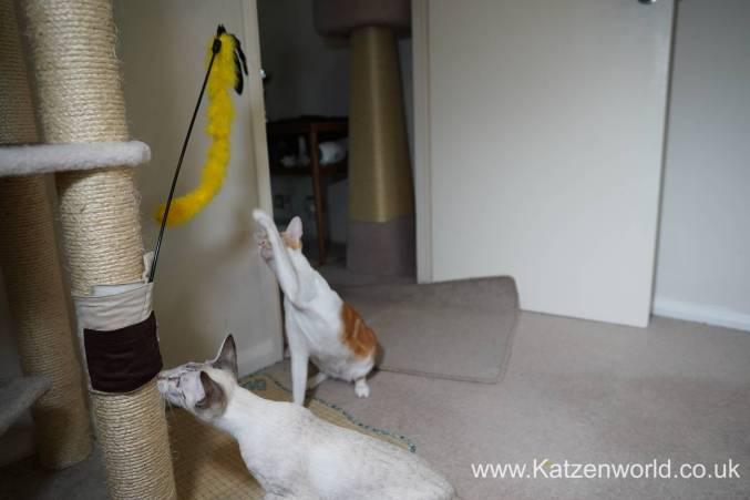 Katzenworld scratch tree cuff0002
