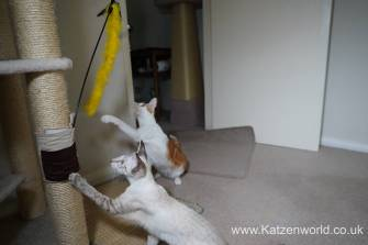Katzenworld scratch tree cuff0003