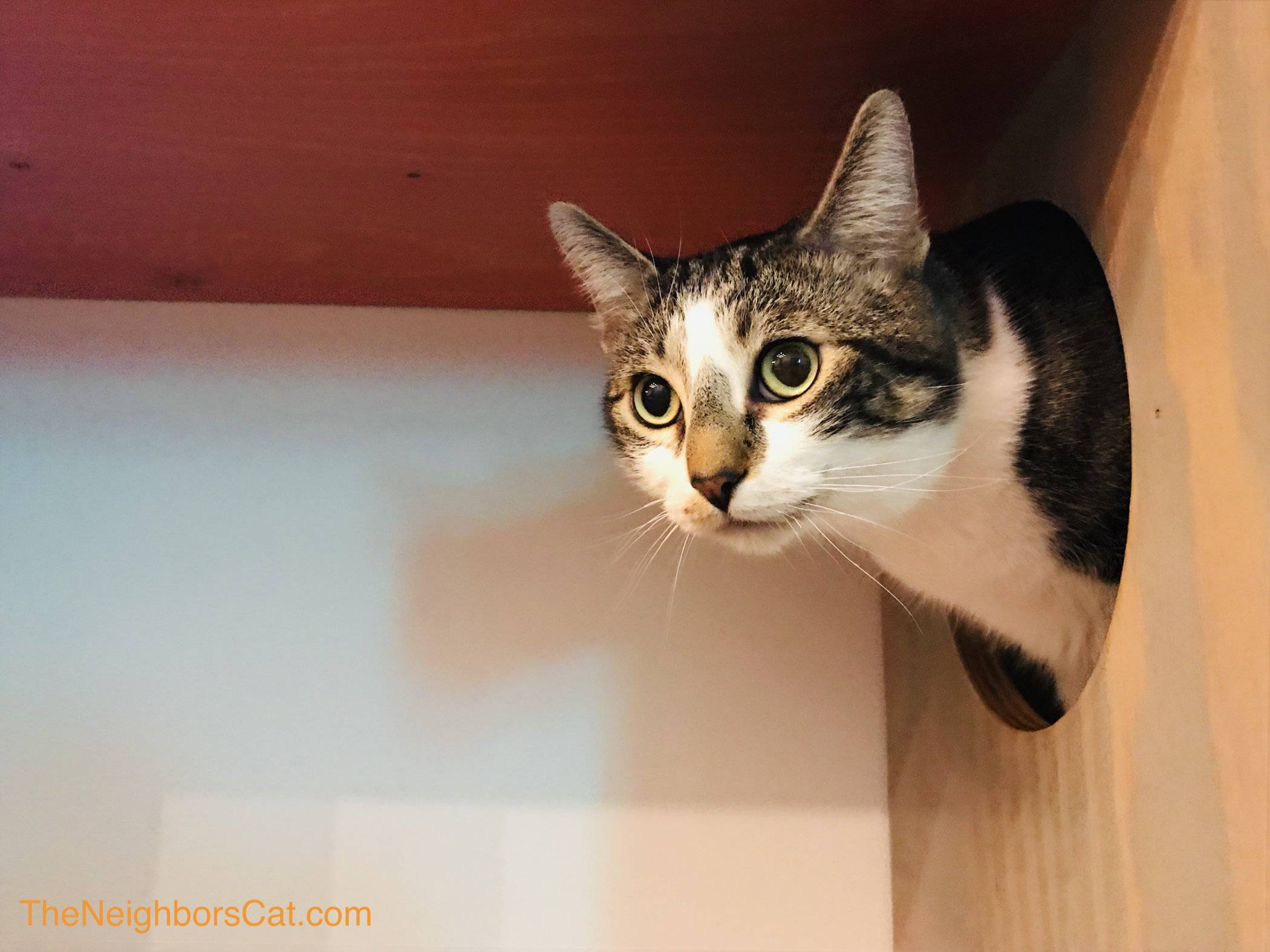 dating sites for cat lovers uk