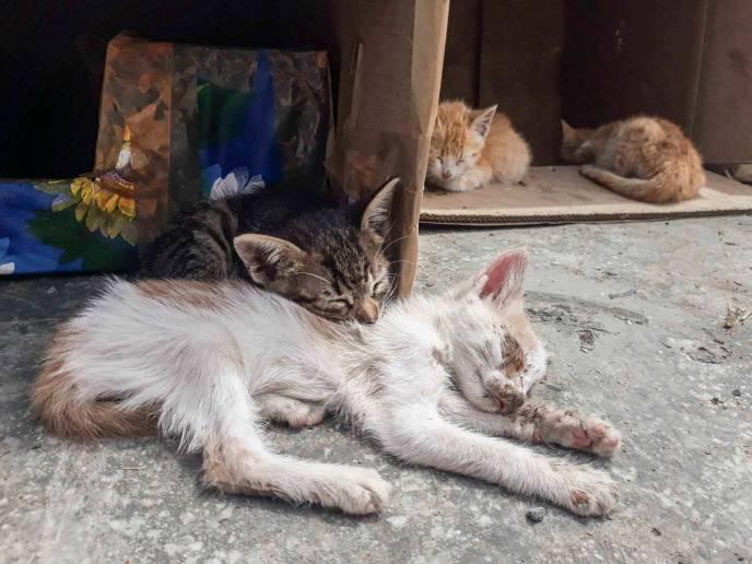 Abandoned sick kittens-10-3