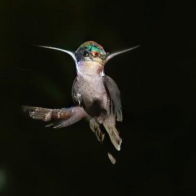 """""""Bird"""" - GAN Art von Michael Katzlberger"""