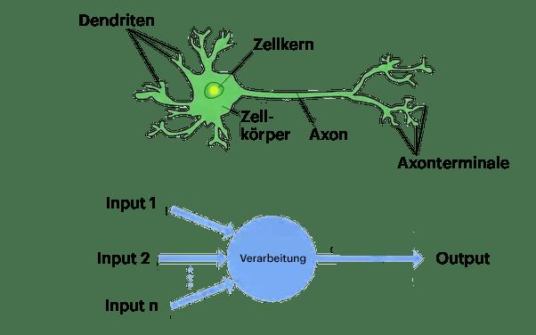 Unterschied menschliche Gehirnzelle und künstliches neuronales Netzwerk