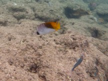 2017 Kauai Fish-032-6