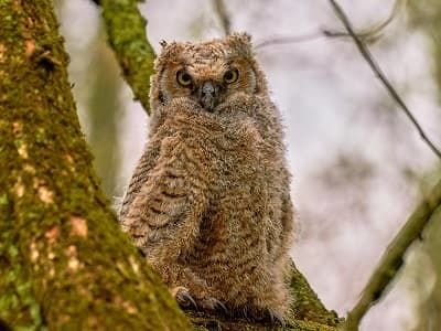 See 'Owlet (photo 4)'