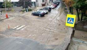 Liūtis Kaune