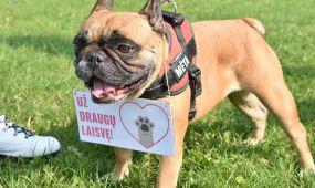 Eitynės už gyvūnų teises