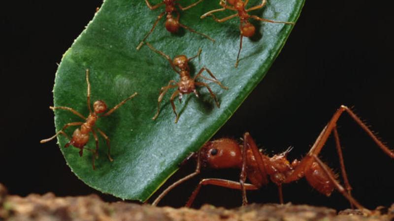 Kaip išnaikinti skruzdes, kad jos negrįžtų į namus?