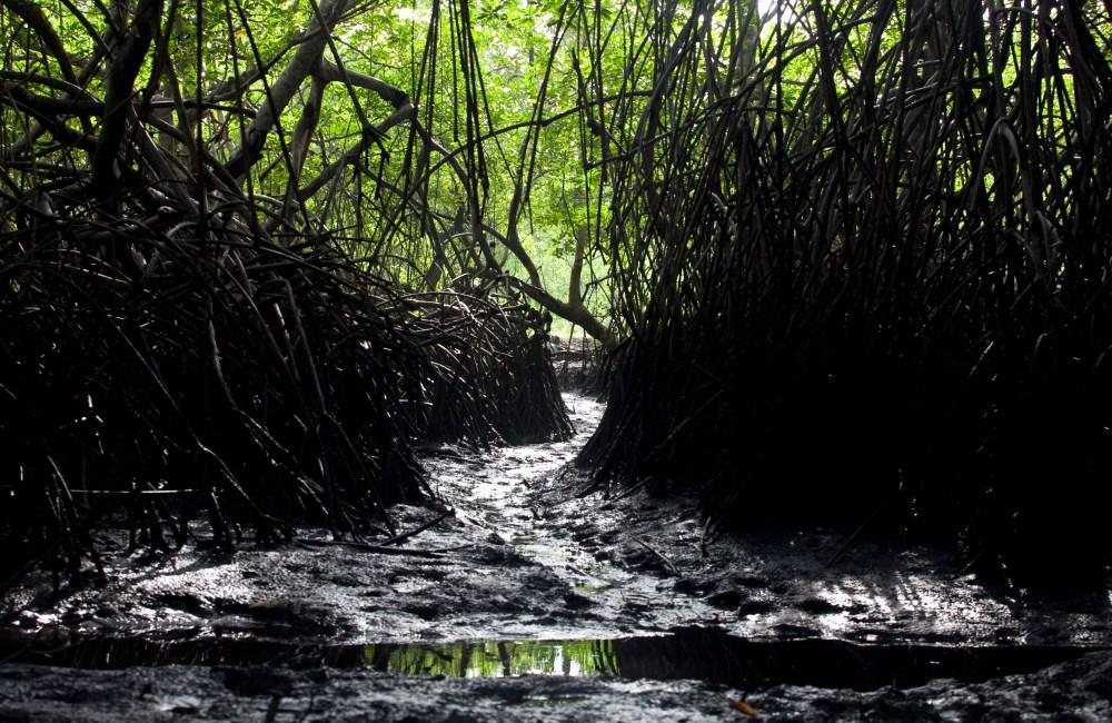 The Mangroves (3/6)