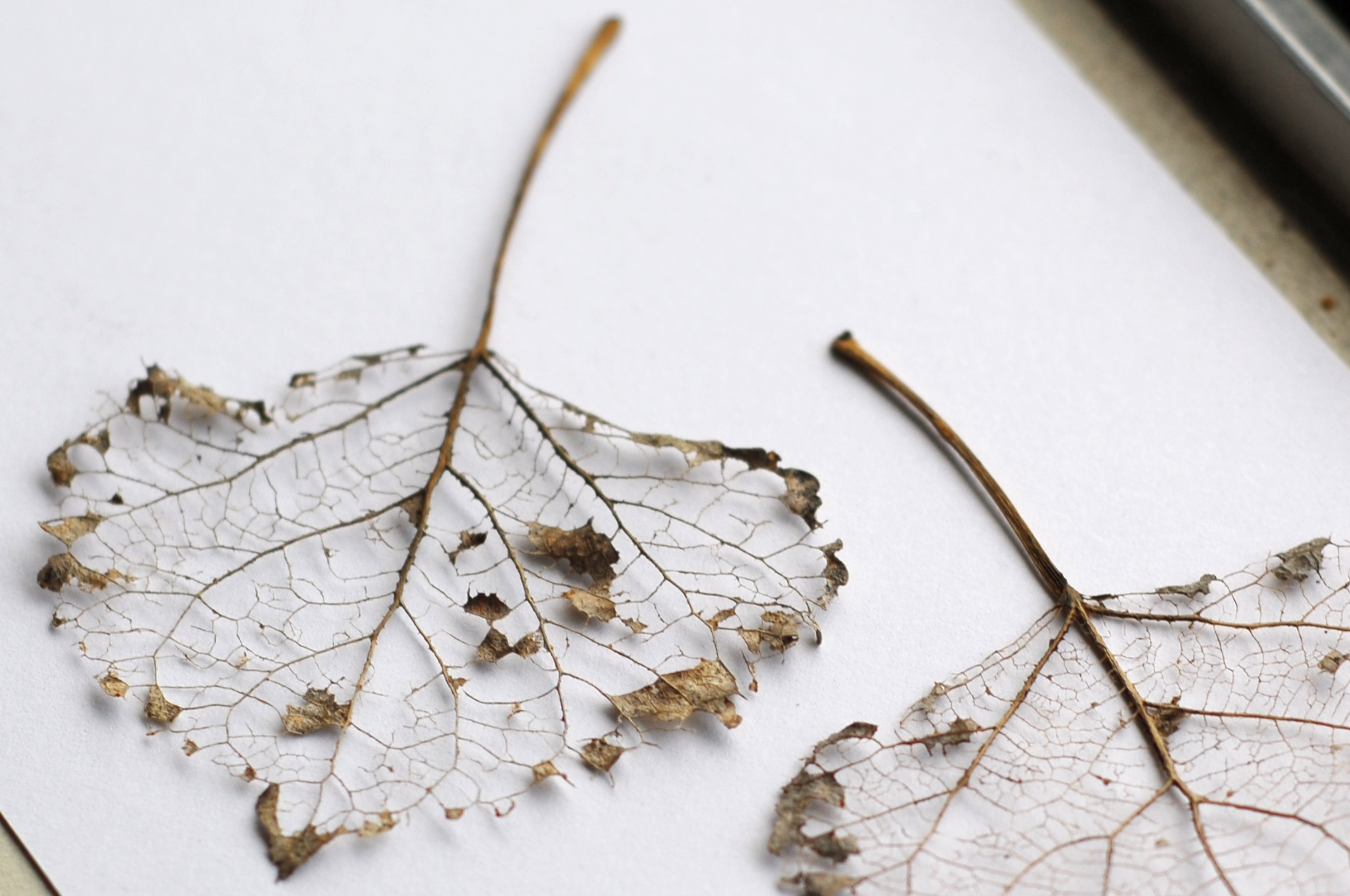 Once Upon A Leaf