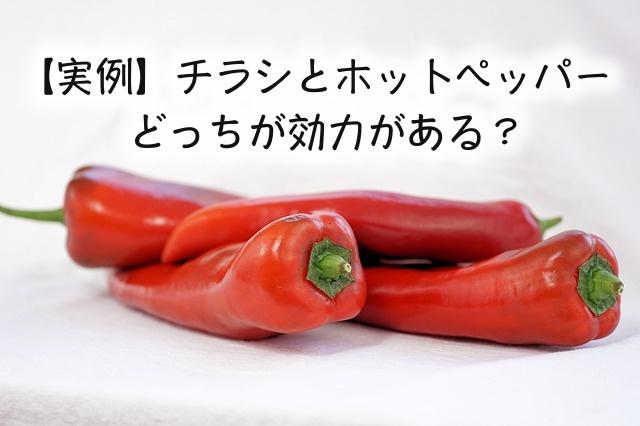 【実例】チラシとホットペッパー、美容室集客はどっちが効力がある?|Kawada Takeshi