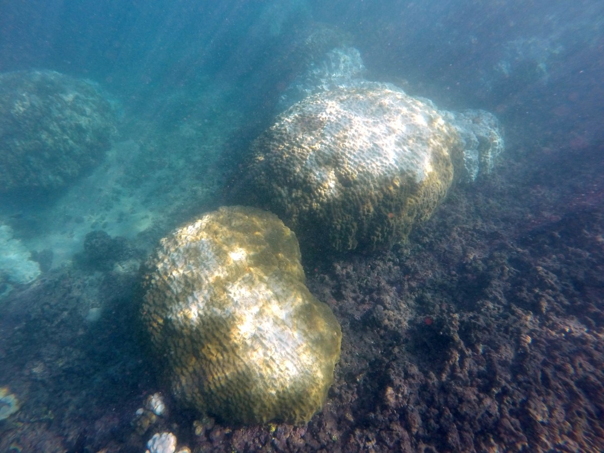 mound coral recovery 12.6.15