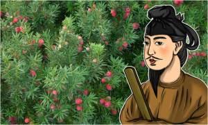 紅豆杉と聖徳太子のイメージ画像