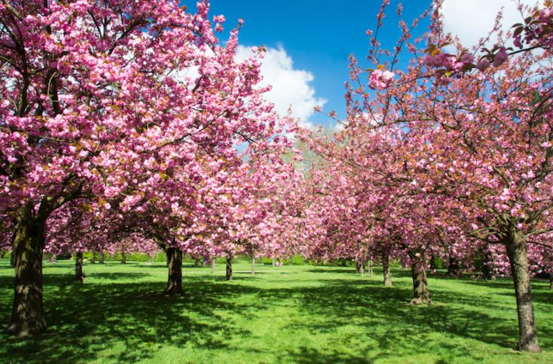 Paris na primavera