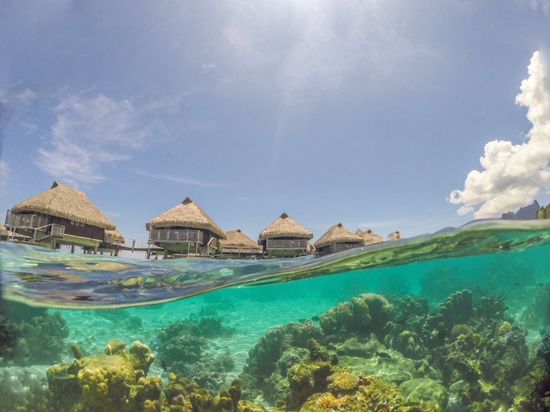 Mergulho nas Ilhas da Polinésia Francesa