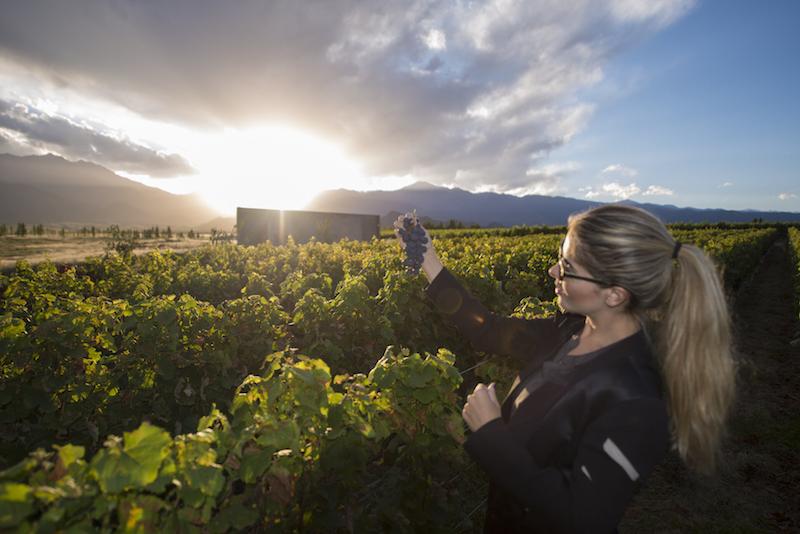 Pôr do sol nas vinícolas de Mendoza