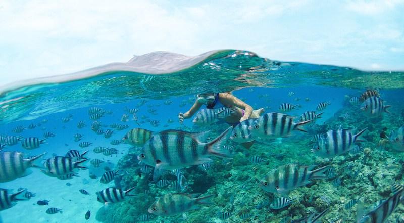 Mergulho com snorkel em Bora Bora