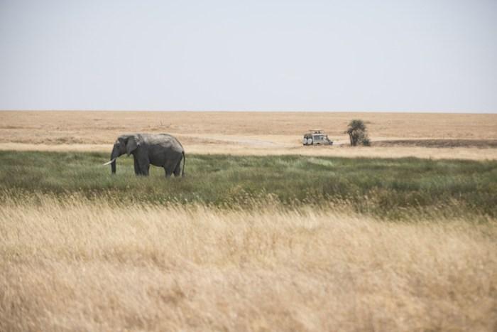 Elefante: Safári no Serengeti