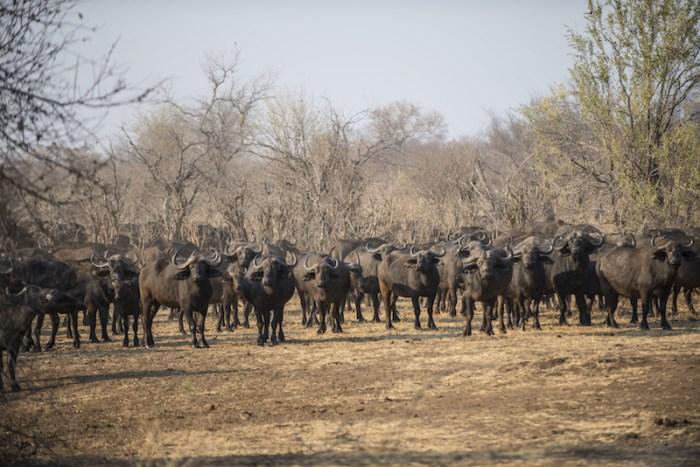 Safari de luxo no Zimbábue