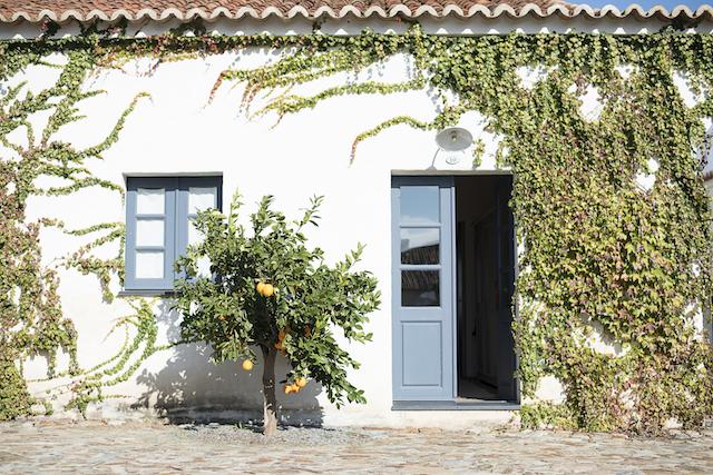 Vinícolas e adegas para visitar no Baixo Alentejo