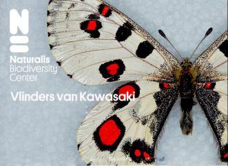 パルナシウス蝶 川崎 裕一コレクション オランダ国立自然史博物館 特別展示 再現