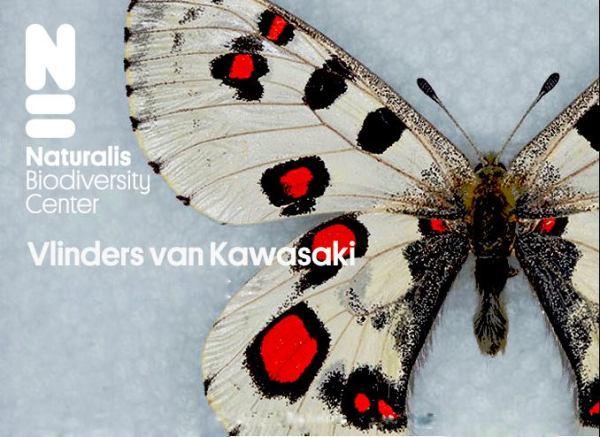 【開廊記念】蝶 ▷ネオダダ ▷建築▷アートがつなぐ。未来。展 <1>パルナシウス蝶 川崎裕一コレクション