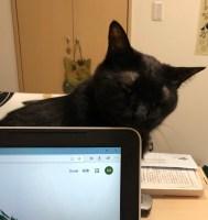 黒猫は麻呂?