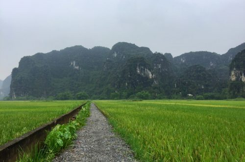 Rice field in Ninh Binh