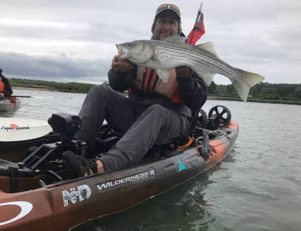 A healthy bass caught in the Wells harbor using the Wilderness Systems pedal drive Radar 135