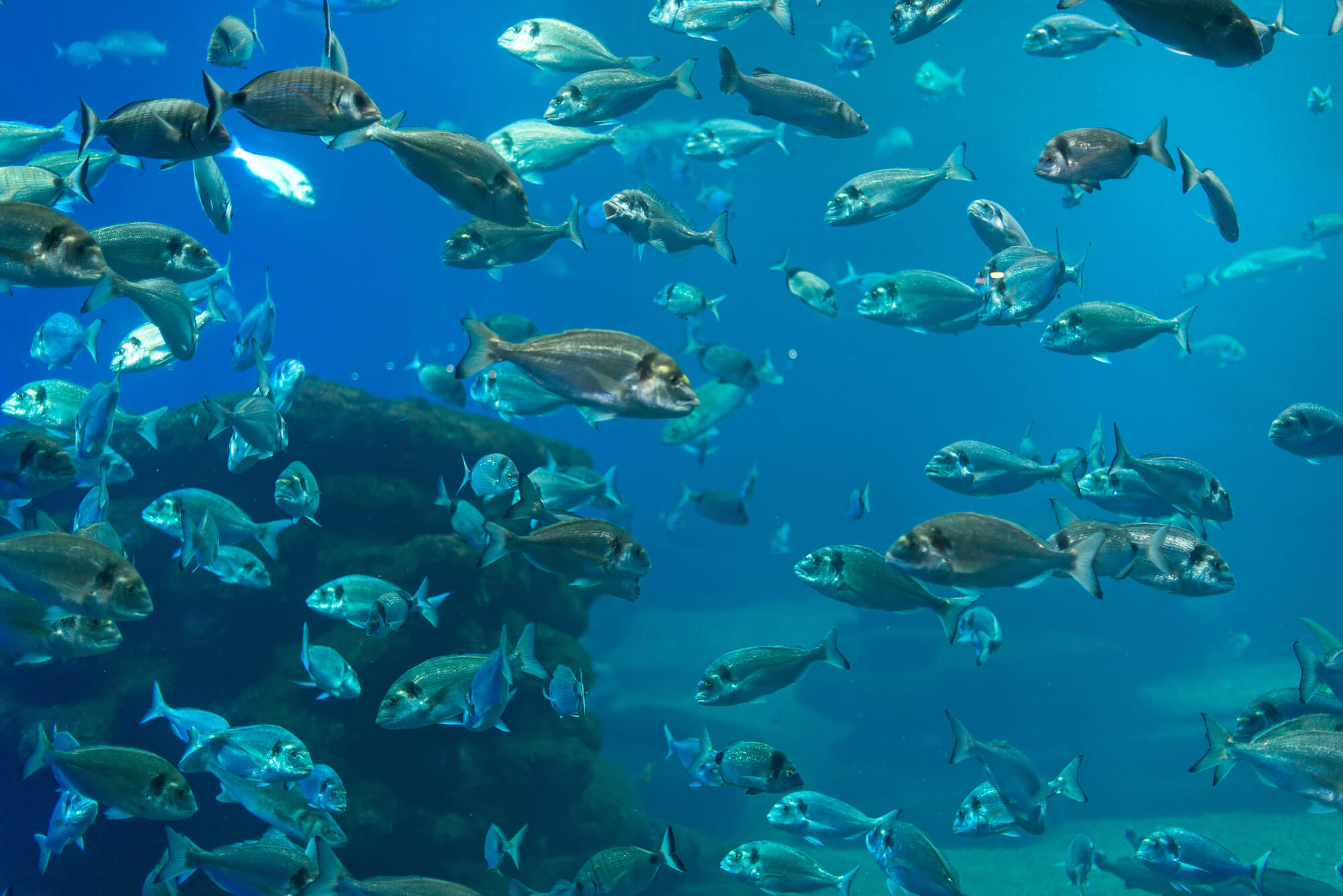 Lots of fish in sea - fish finder GPS