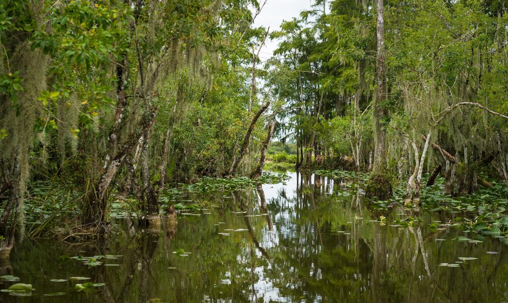 Fishing - Everglades Florida