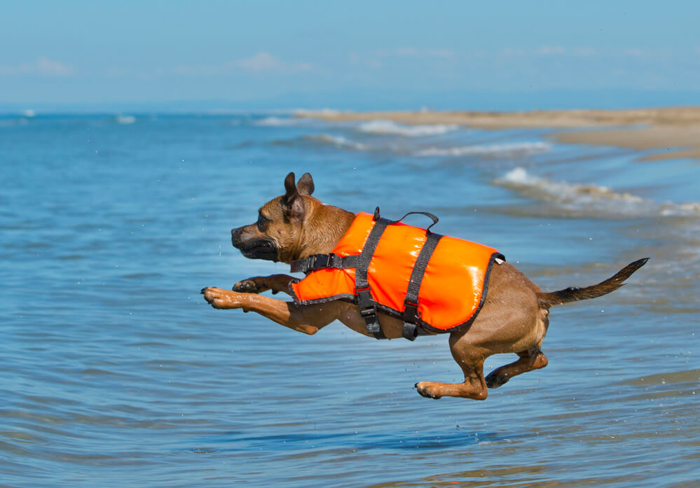 Dog jumping into sea with life vest