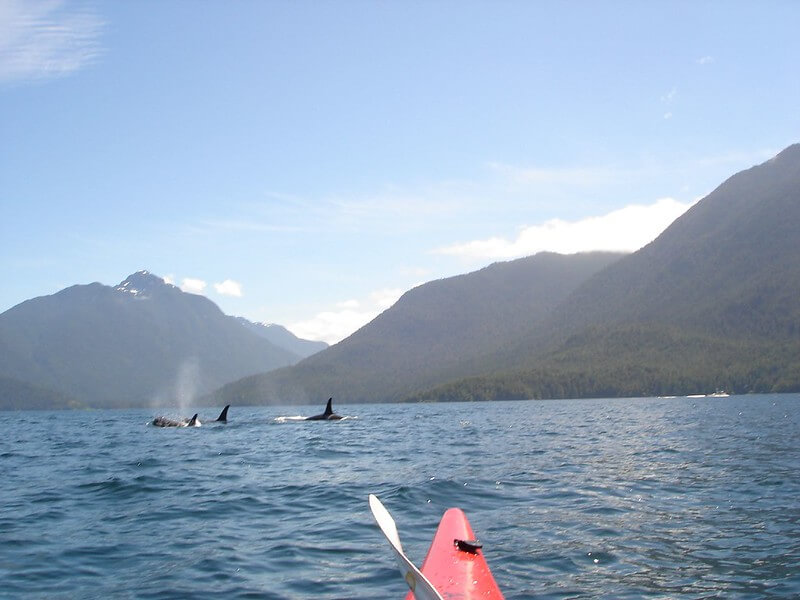Canada - Kayaking With Orcas