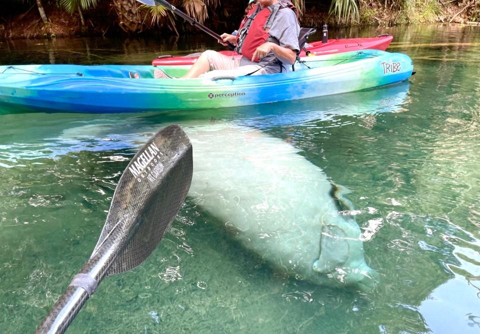 Kayaking Silver Springs