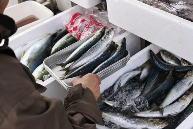 鮮魚 移動販売 イワシ