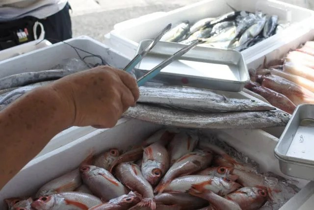 タチウオ 太刀魚