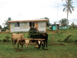 Land is still worked with oxen