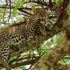 Kenya & Tanzania Safaris