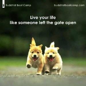 dogs gate open